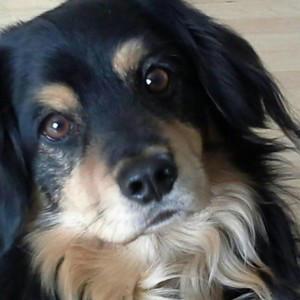EmilicentArt's Profile Picture
