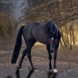 Horse by kirraleestudfarmHEE
