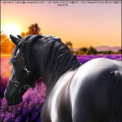 Lavender horse by kirraleestudfarmHEE