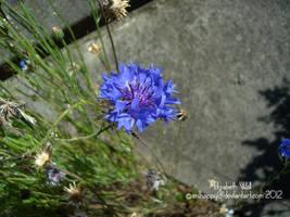 Dainty Lil Purple by im1happy