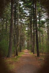 The Walkway by sinead
