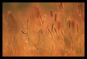 Grass by snader