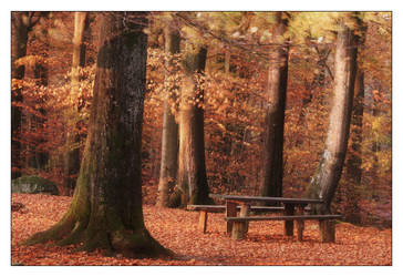 The Bench by snader