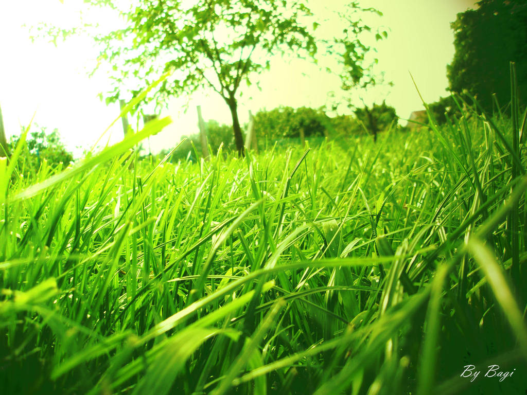 grass by bagi1992