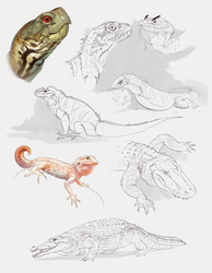 Reptile studies by miriamrez