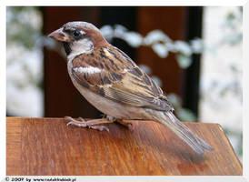 Bird by jestemradek