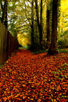 Autum Path by Teakster