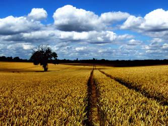 Summer Harvest IV by Teakster