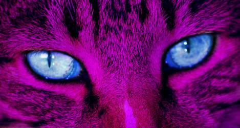 Alice N Wonderland Cat by Stridle