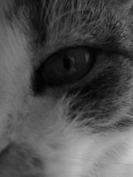 Close-up by Serkhet-hetyt