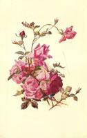 rose leaves 4 by jinifur