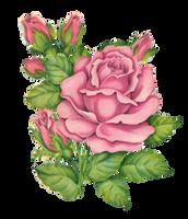 Rosey clip by jinifur