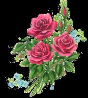 Rosey clip 1 by jinifur