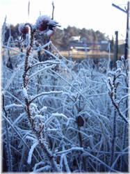 - Spikey Frost Beauty - by lijlover8