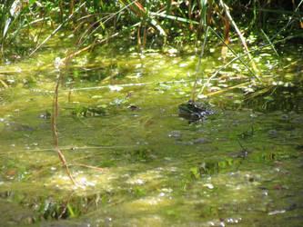 Frog by mprada69