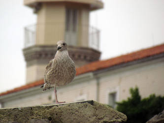 Bird and lighthouse by mprada69