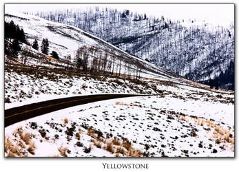 Yellowstone by pictureguy