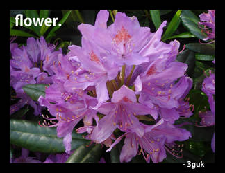 flower. by 3gUK