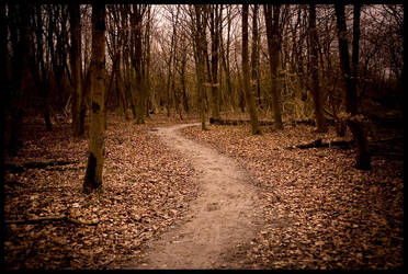 Into the darks woods by MLunenborg