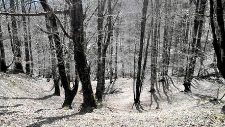 Grey Forest by 12avendesigner