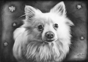 Dog portrait 67 by AnaMariaMaxim