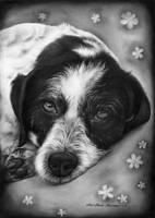 Dog portarit 70 by AnaMariaMaxim