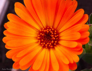 just orange by asiaibr