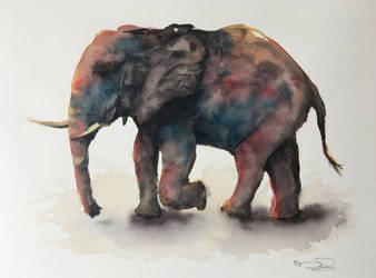 Elephant   *SOLD* by dominikgschwind