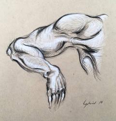 Anatomy Study by dominikgschwind