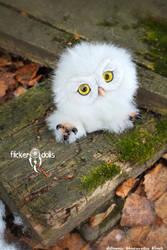 Owl Sowush 1 by Flicker-Dolls