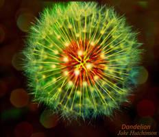 Dandelion by jakehutchy