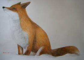 Sitting Fox by Roborak