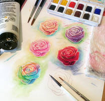 Practice Roses by auxeru