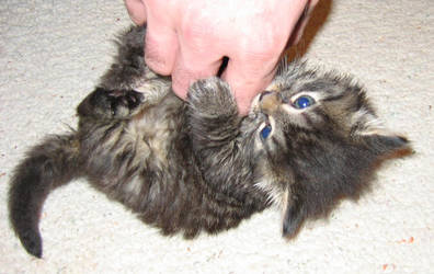 Attack of the Kitten 1 by photorox33