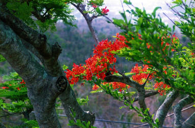 Flowering Tree by Tailgun2009