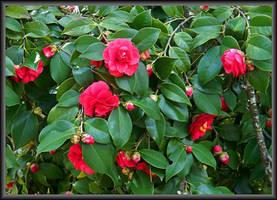 Buds N Blooms by Tailgun2009