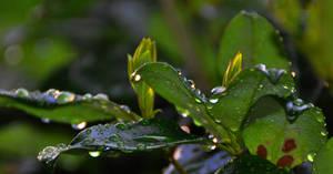 Leaf Drops by Tailgun2009