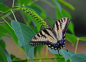 Backyard Butterfly 2 by Tailgun2009