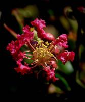 Tree blooms beginning by Tailgun2009