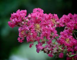 Blooming 2 6-29-10 by Tailgun2009