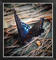 Painted Butterfly by Tailgun2009