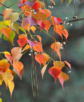 The Colors of Autumn by Tailgun2009