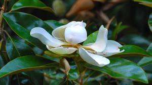 Justa Magnolia enjoying life by Tailgun2009