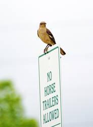 Lookin 4 horse trailer violations by Tailgun2009
