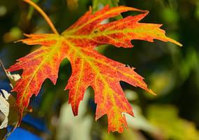 A Leaf by Tailgun2009