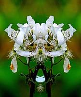 Funny Flower by Tailgun2009
