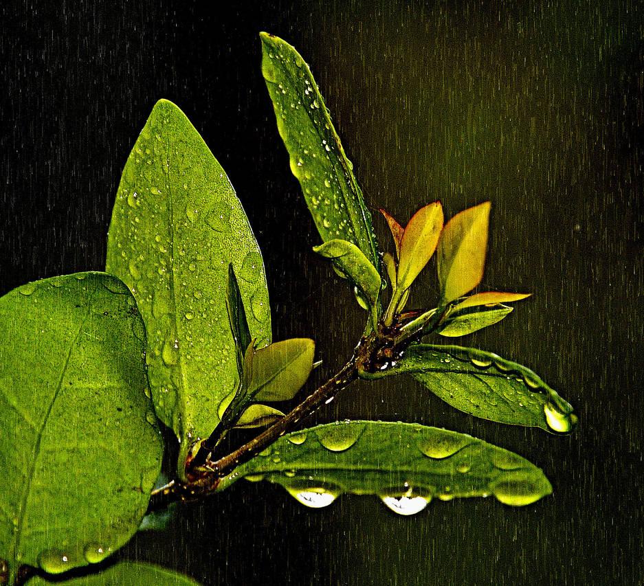 Rain Rain go AWAY by Tailgun2009