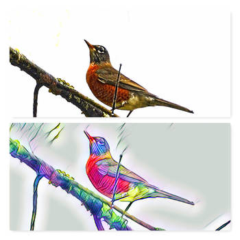 Watercolor Robin by Tailgun2009