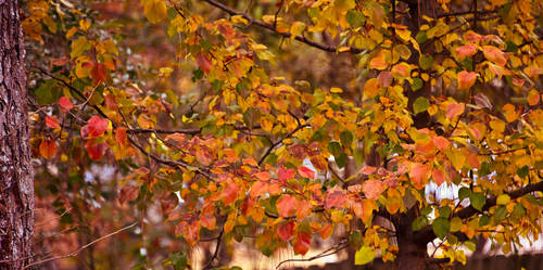 Remaining Fall Color by Tailgun2009