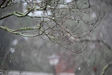 Not fake Rain by Tailgun2009